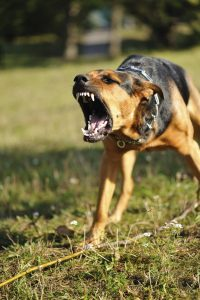 iStock_000010784359_dog bite attack_Medium