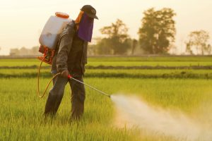 weed killer roundup being sprayed