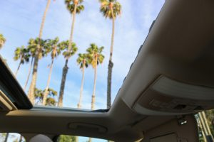 palm trees in santa barbara through car sunroof